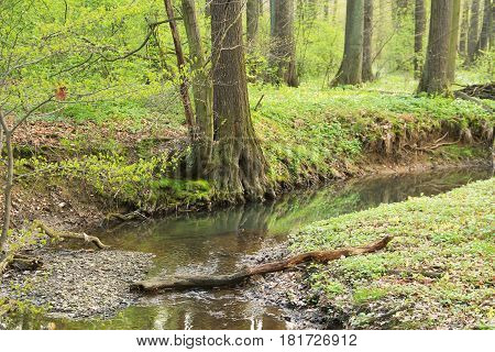 narrow brook flowing through the green forest in spring, Poodri, Czech Republic