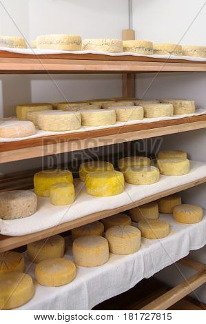 Cheese At The Dairy, Cheese Is Ripen On Wood Racks