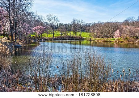 A scenic view of the Holmdel Park lake on an early Spring day in New Jersey.