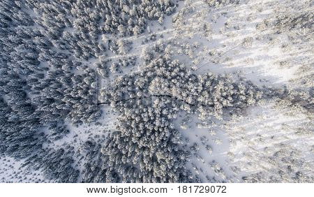 Aerial view of river and snowy trees on a sunny winter day