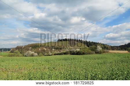 spring landscape of Beskydy mountains with some blooming trees, green field and fluffy couds
