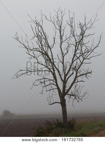Dead lonely tree against misty sky, Podlasie, Poland, Europe