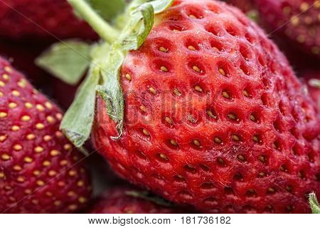 Macro shot of rotten strawberries. Closeup, fruit