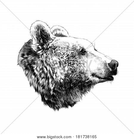 the bear's head profile looking into the distance sketch vector graphics black and white pattern