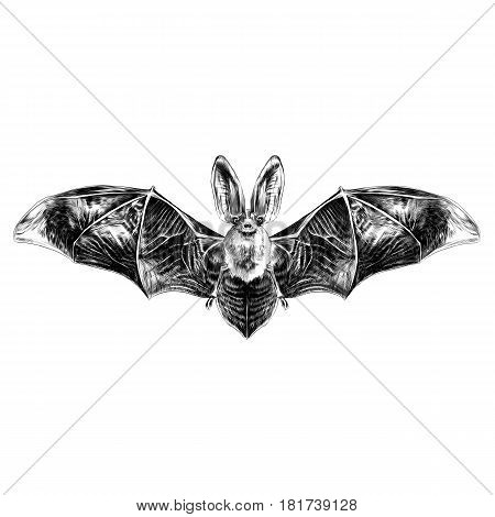 bat with open wings symmetrical pattern sketch vector graphics black and white drawing