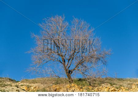 Branches of a tree against blue sky, Dry or dead tree branch on blue sky background.