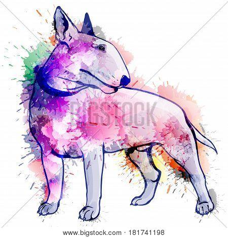 Bull terrier grunge illustration on a white background