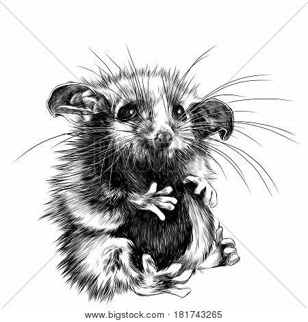 a possum sits a little cute funny sketch vector graphics black and white drawing