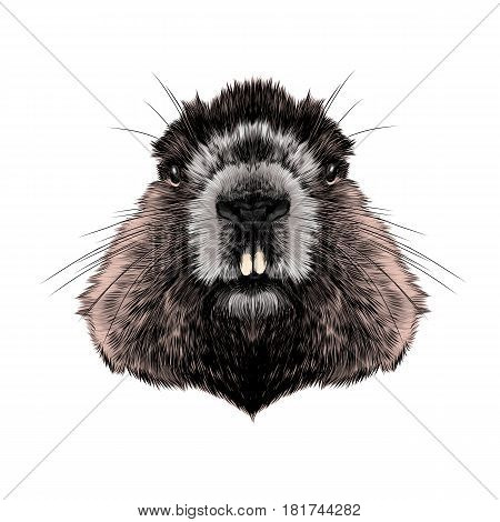 head Groundhog hairy symmetric sketch vector graphics color picture