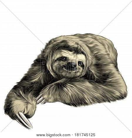 sloth lies with crossed legs looking right and smiling sweetly sketch vector graphics color picture