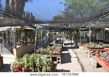 PALM SPRINGS, CA - MARCH 24, 2017: Moortens Botanical Garden and Cactarium. The private arboretum was created in 1938, housing cacti and desert plants from around the world.