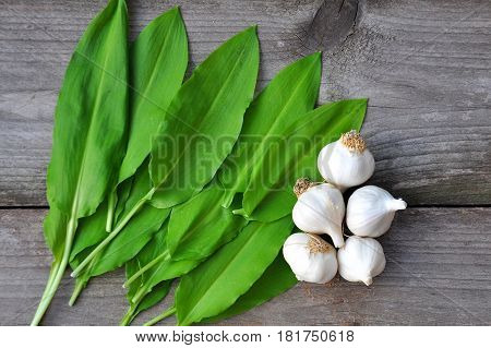 Wild garlic ramson or bear garlic with garlic bulb and garlic cloves on wooden background