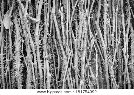 black and white macro of tendrils for backgrounds