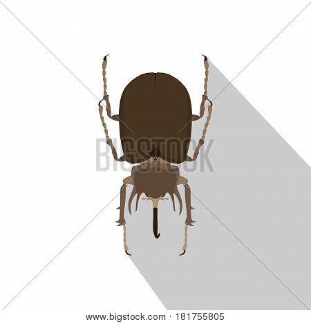 Rhino beetle isolated on white background vector