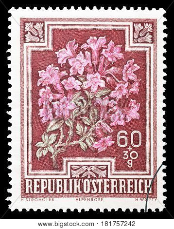 AUSTRIA - CIRCA 1948 : Cancelled postage stamp printed by Austria, that shows Alpen rose.