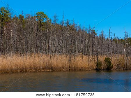Pond with marsh grasses and green trees on shore