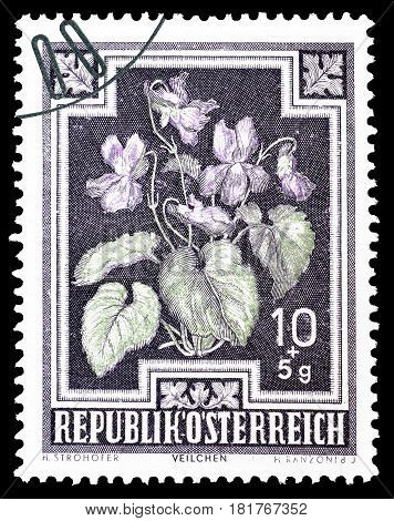 AUSTRIA - CIRCA 1948 : Cancelled postage stamp printed by Austria, that shows Wild violets.