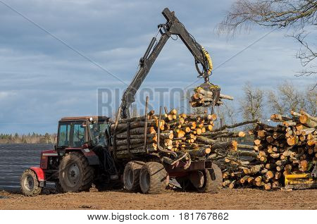 Loader Unloads Logs Out Of A Timber Truck