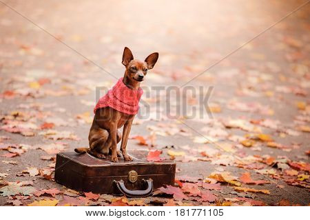 Dog Toy Terrier For A Walk In The Park