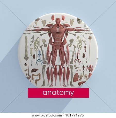 Anatomy infographic with title: