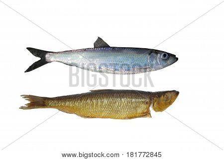 fresh and smoked herring on white background