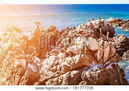 Rocks With Brown Pelicans In Chile