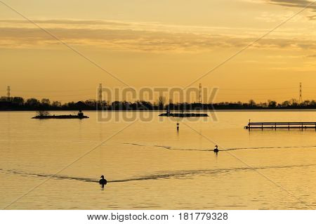 Golden sunrise tranquil scene of two birds dirfting calmly on a golden lake reflecting the morning color