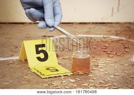 Collecting of fly larva on crime scene by forensic entomologist