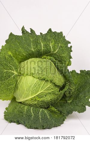 Green savoy cabbage on a white background