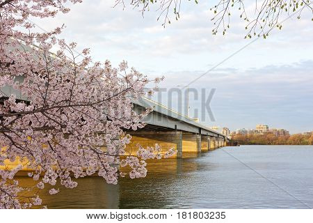 Bridge across the Potomac River in the morning Washington DC USA. Blossoming cherry tree branch and view on Alexandria Virginia.