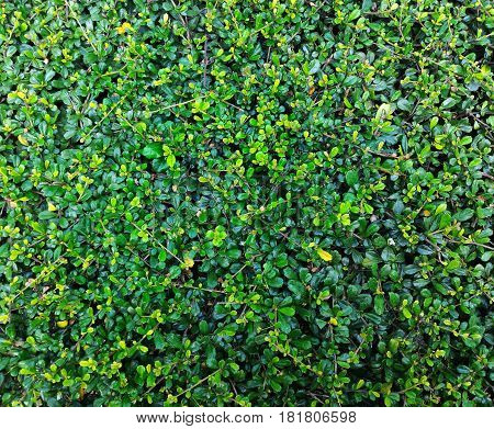 Detail of green plant for nature background