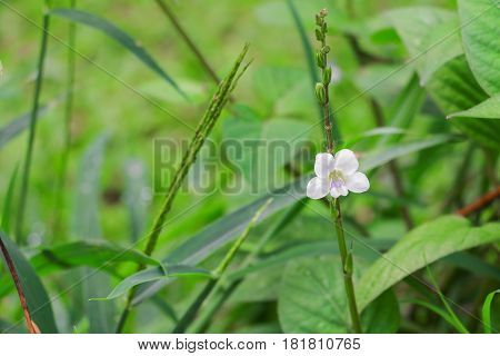 small white flower with a green background