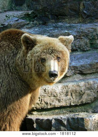 Mamma Bear Is Watching Me