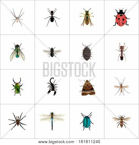 Realistic Ladybird, Insect, Emmet And Other Vector Elements. Set Of Hexapod Realistic Symbols Also Includes Tarantula, Housefly, Midge Objects.
