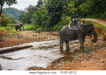 Scenic view of two elefants crossing the river in the tropical rain forest of Khao Sok sanctuary, Thailand