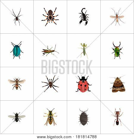 Realistic Poisonous, Butterfly, Tarantula And Other Vector Elements. Set Of Animal Realistic Symbols Also Includes Housefly, Gnat, Bee Objects.