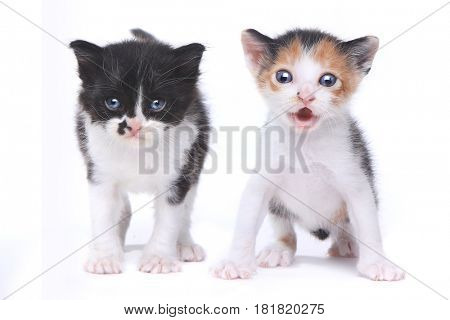 Two Adorable Baby Kittens on White Background