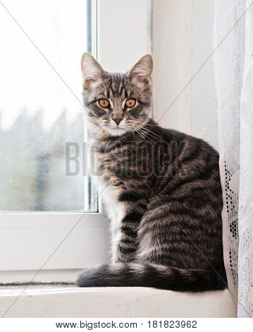 Cat sitting on windowsill and looking in camera.