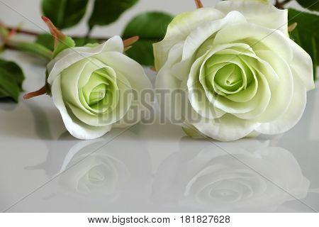 Clay White Roses Flower