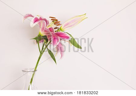 Close up lily flower in a vase