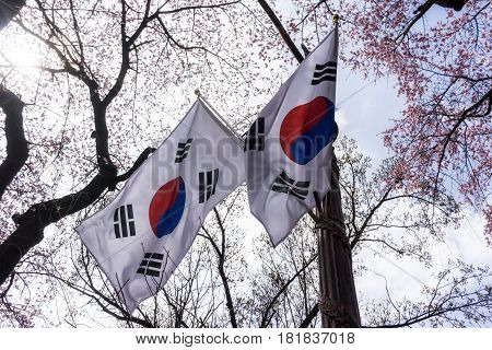 Korean Flag With Cherry Blossoms
