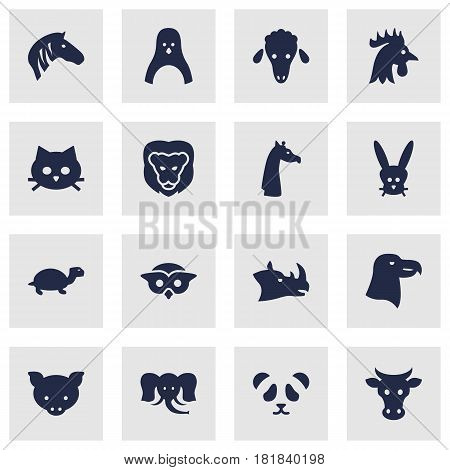 Set Of 16 Brute Icons Set.Collection Of Bear, Rhinoceros, Tomcat And Other Elements.