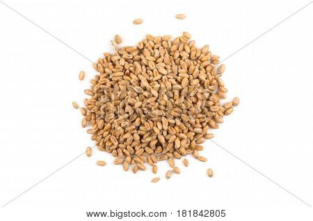 Wheat Grain On White