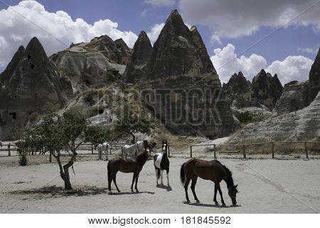 caballos paseando en una zona rural de la Capadocia, Turquia