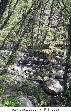 Forest and river of the route of the Serradilla. Piedralaves, Avila. Spain