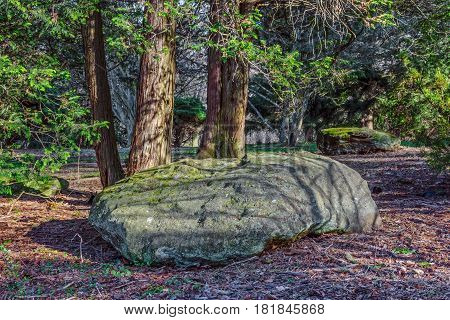 A large stone among the evergreens in the David C. Shaw Aboretum in Holmdel Park in NJ.