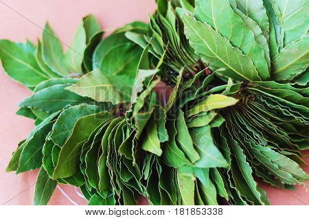 Dry green laurel leaves ready for cooking. branch of laurel bay leaves on a paper