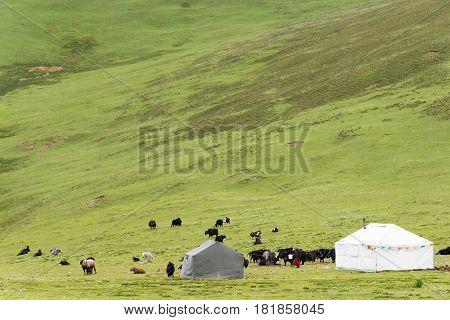 Litang, China - Jul 18 2014: Grasslands At Litang Town. A Famous Tibetan Town Of Litang, Sichuan, Ch
