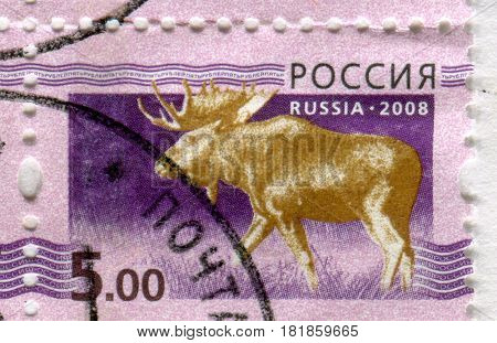 GOMEL, BELARUS, APRIL 13, 2017. Stamp printed in Russia shows image of  The moose or elk, Alces alces, circa 2008.