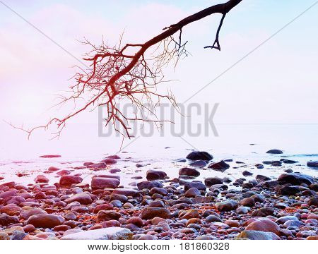 Romantic Atmosphere,  Colorful Sunset At Sea. Stony Beach With Bended Tree And Pink Sky